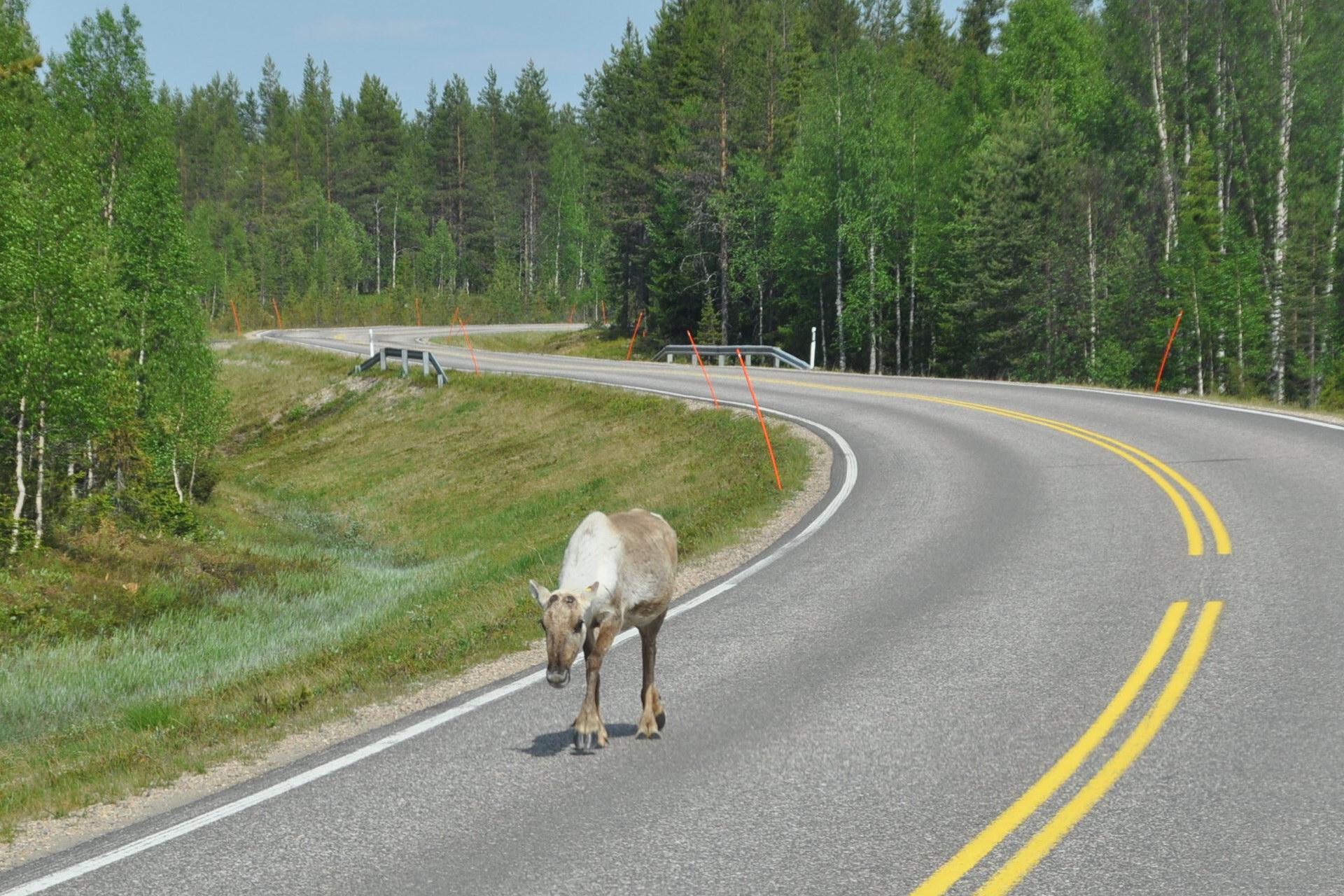 Поездка в финляндию на машинах на новый год